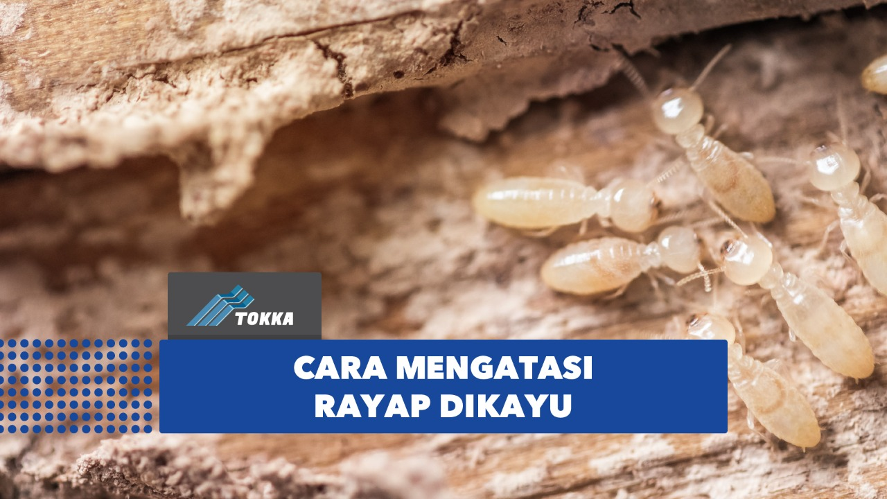 Read more about the article Rayap pada Kayu